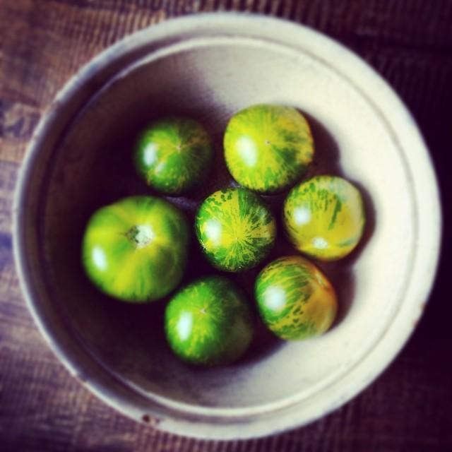 pomidory zielone