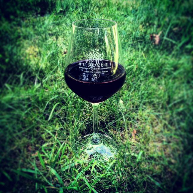 Wino_02