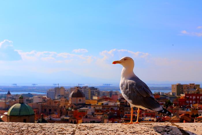 Cagliari Castello L_16