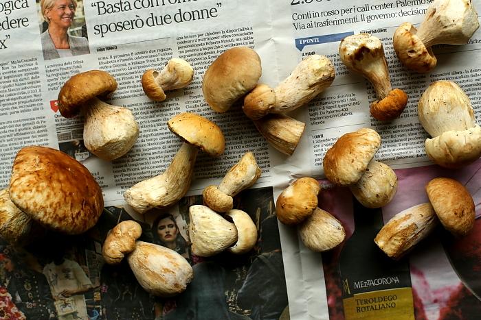 Puder z grzybów