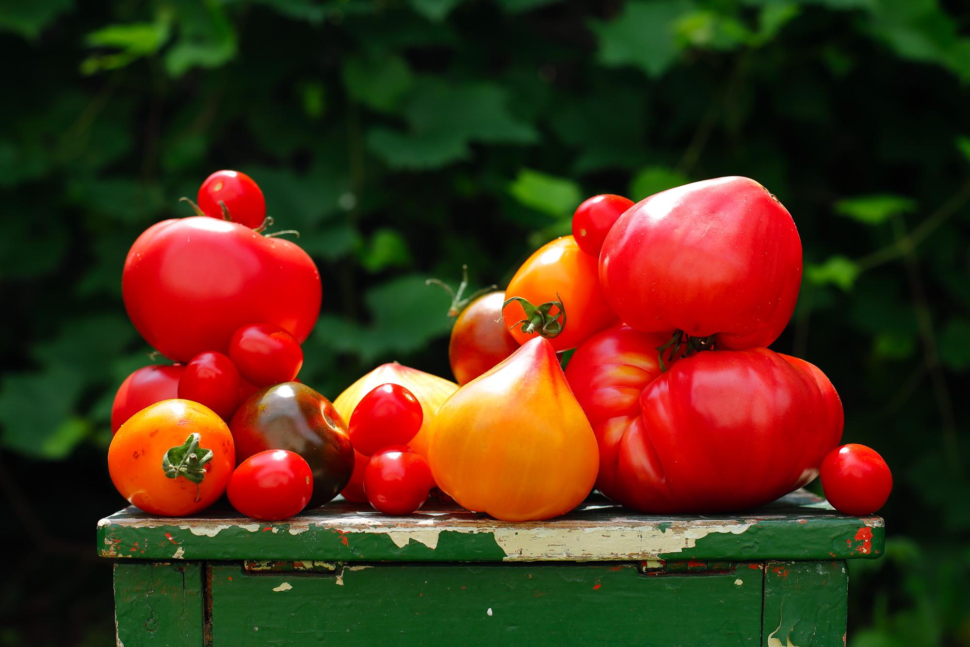Pomidory z piekarnika
